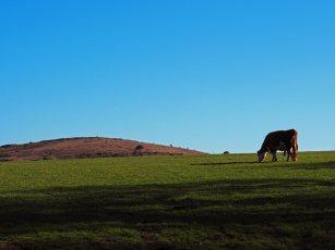 Godolphin Hill