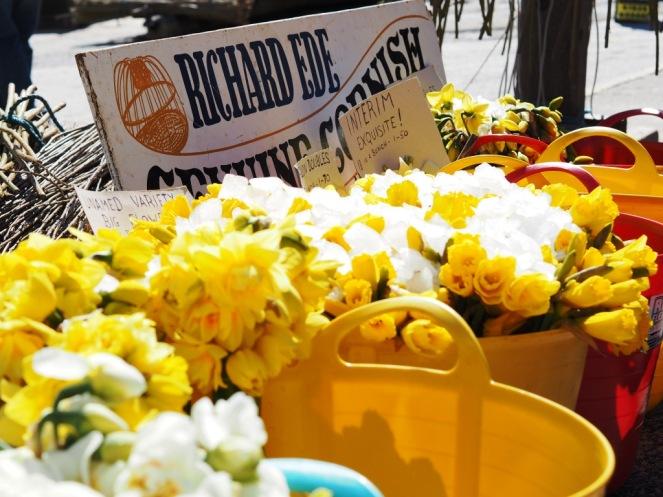 Cornish Daffodils