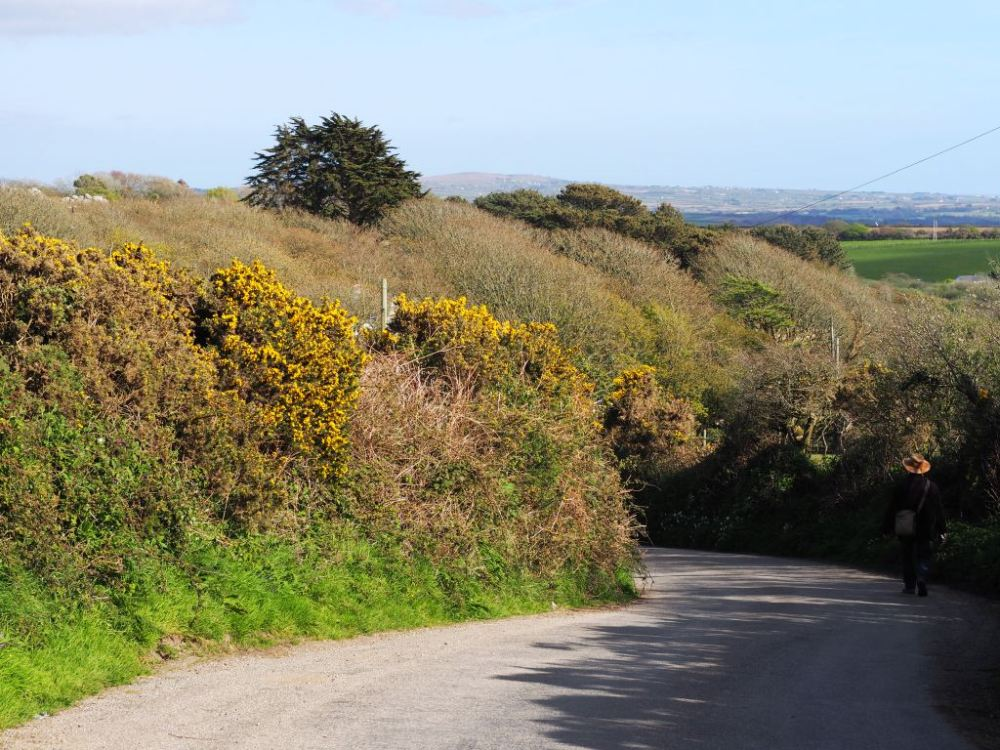 A Cornish lane