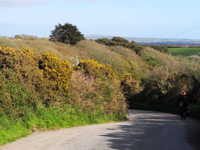 A Cornish lane