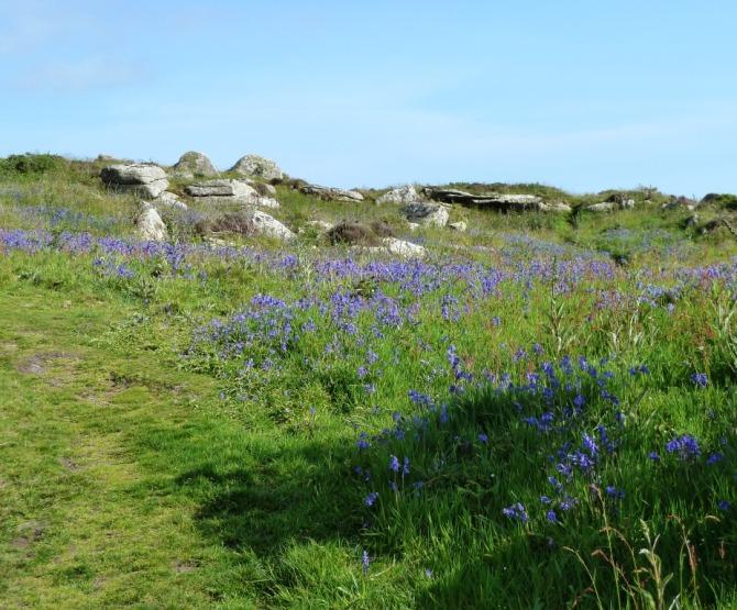 bluebells (3)