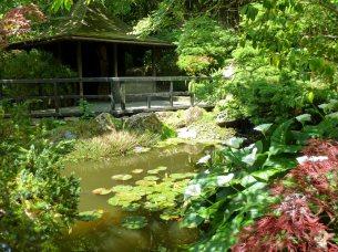 The Koi lake and Tea-House