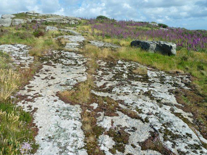 stonecrops