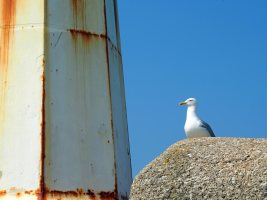 Seagull and lighthouse
