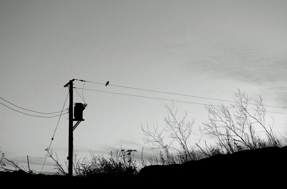 bird-on-the-wire-2