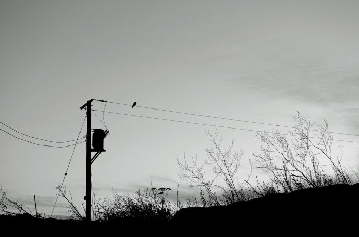 bird-on-the-wire-2