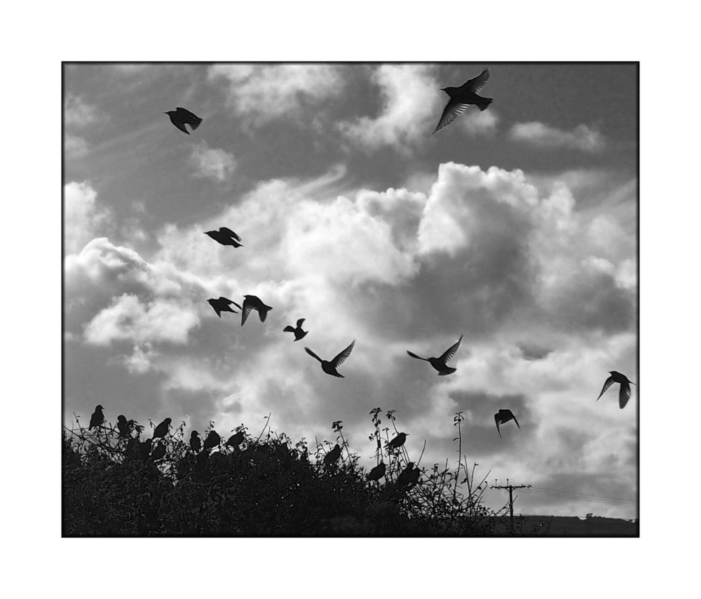 birds-in-flight