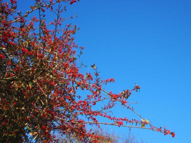 and a blue sky.