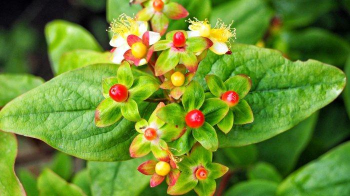 In My Garden: Juneblooms