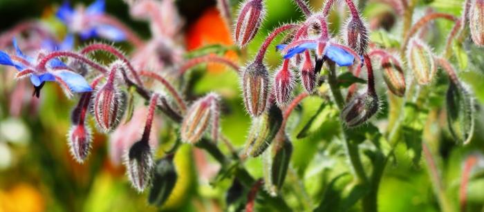 In My Garden: Summer'sEnd