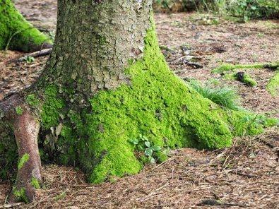 Moss a plenty