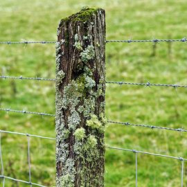 Lovely lichens