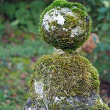 Moss by the well