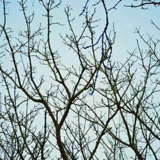 hedgerow (2)