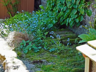 Forget-me-not escapees and mossy sill