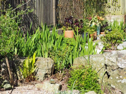 Irises and pots