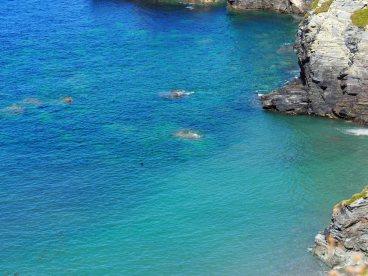 Mutton Cove and seals