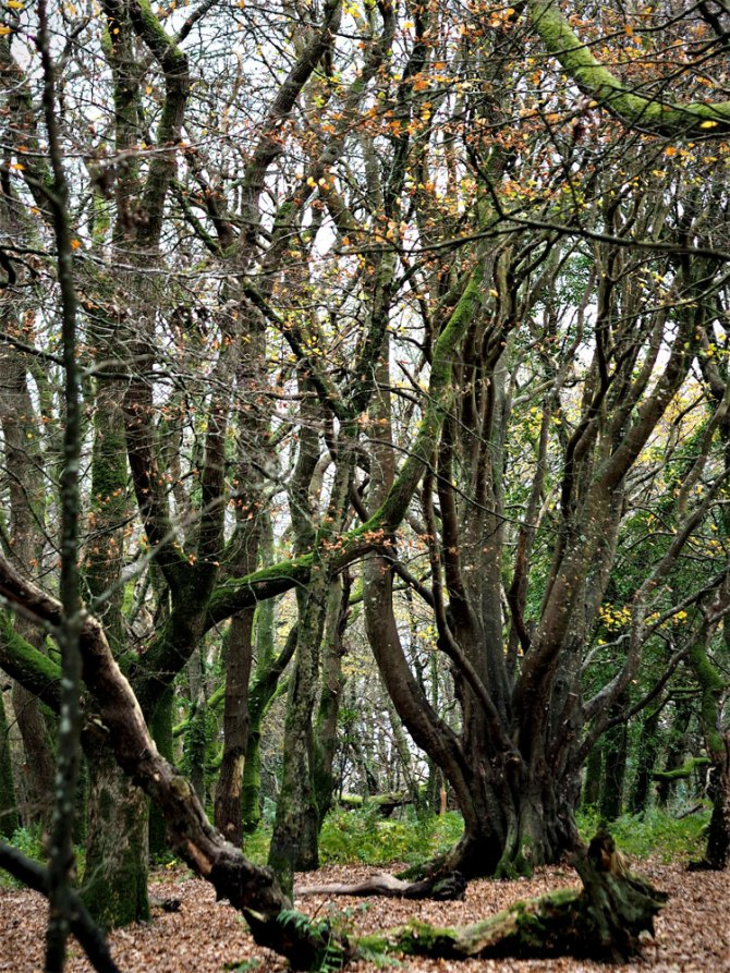 trees (3)
