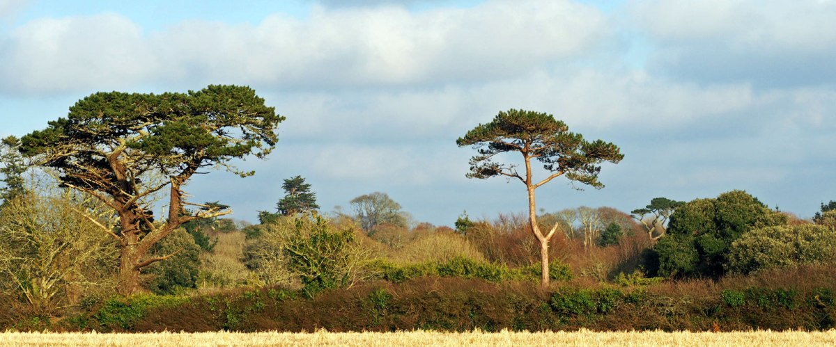 Winter trees by the Helford River