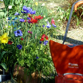 Mower and Anemones