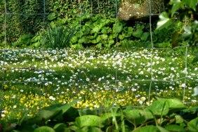 Daisies and celandine