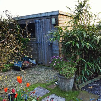 Shed and Bamboos