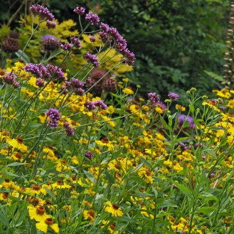 Helenium and Verbena