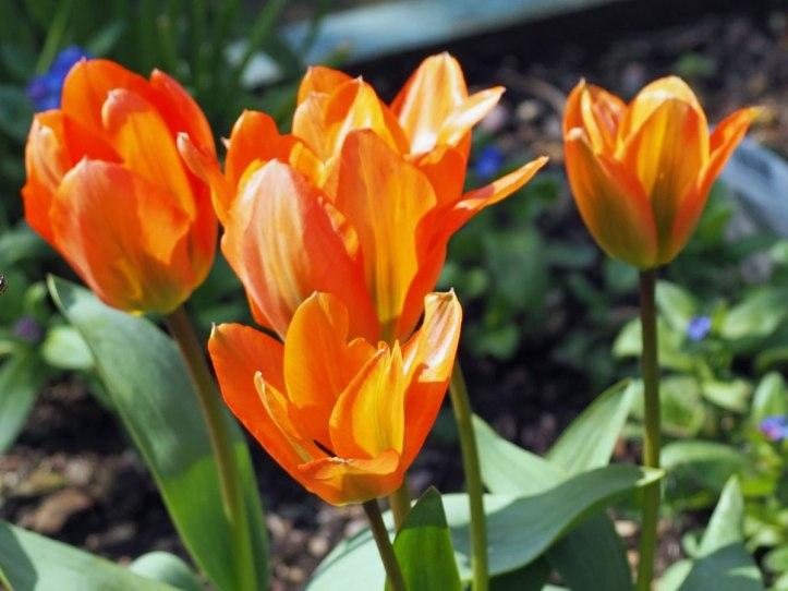 orange emperor (2)