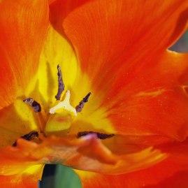 orange emperor (4)