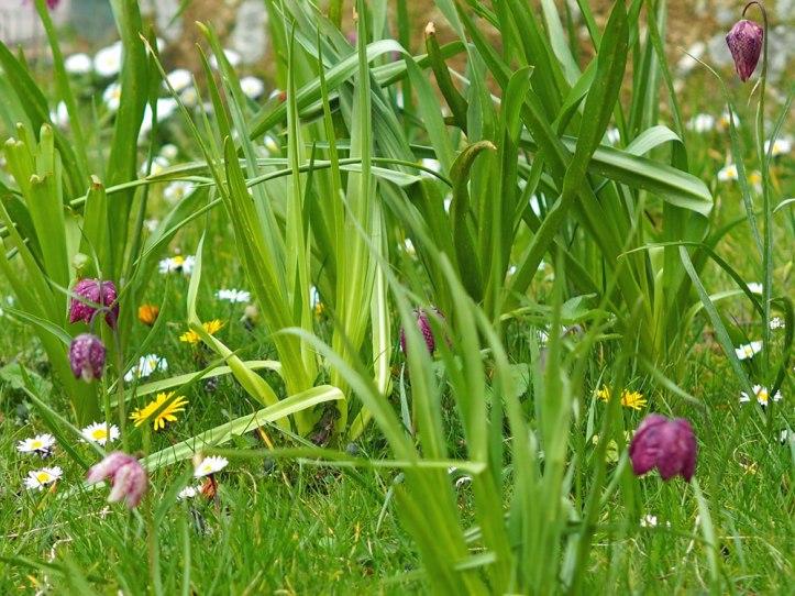 meadow (3)
