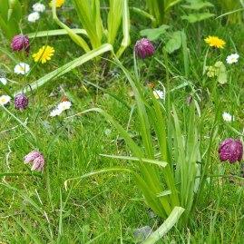 meadow (4)