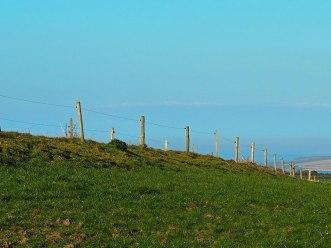 Dairy herd fencing