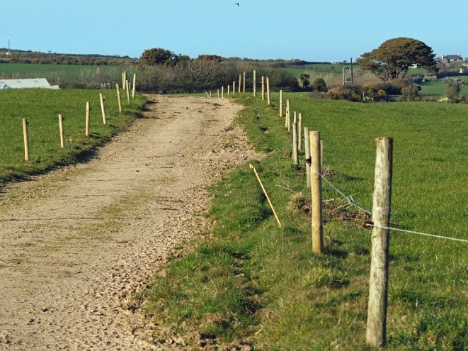 Dairy herd track