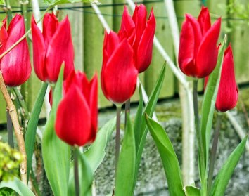 red-shine-(2)