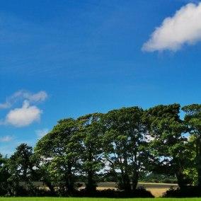 Godolphin Hill (11)