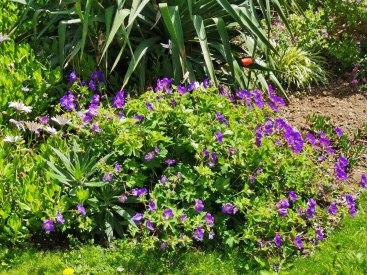 isis garden (10)
