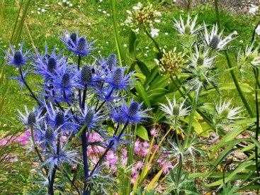 isis garden (14)