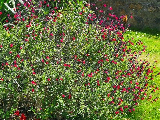 isis garden (17)