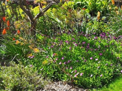 isis garden (4)