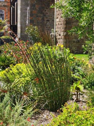 isis garden (5)