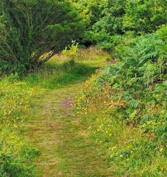 Hawkbit lined path