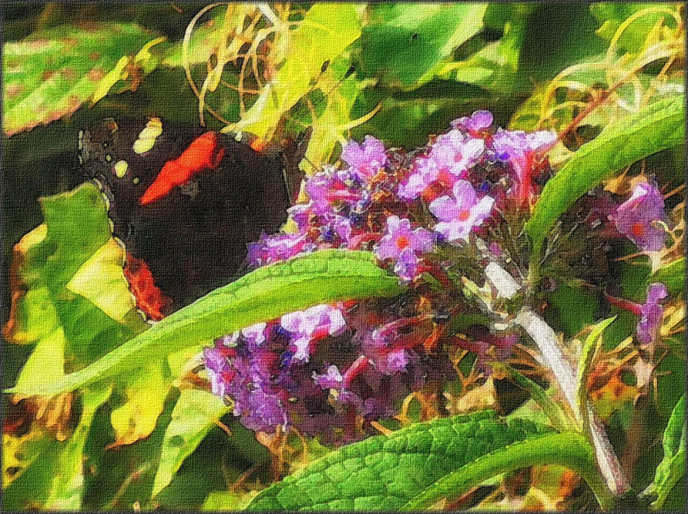 (3) Red Admiral