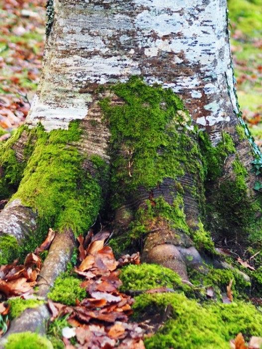 bark (3)