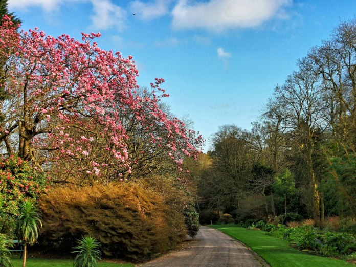 magnolia (3)