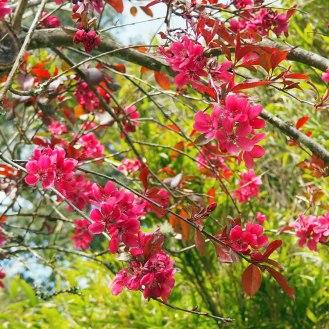 Deep pink blossom