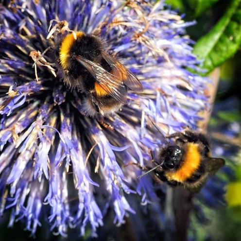 bee (2)