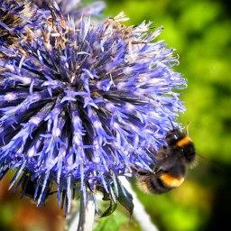 bee (3)