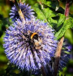 bee (4)