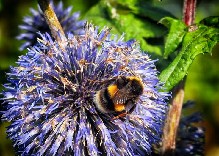 bee (5)